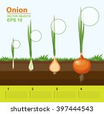 vector illustration. phases and ... | Shutterstock .eps vector #397444543