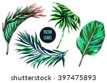vector tropical palm leaves ... | Shutterstock .eps vector #397475893