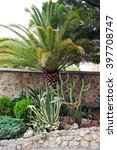 Small photo of Agave americana flower, palm tree and cactus