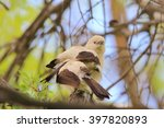 Small photo of Pied Babbler - African Wild Bird Background - Profiles from Nature
