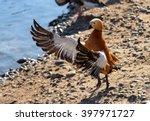 birds and animals in wildlife.... | Shutterstock . vector #397971727