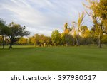 golf camp in sunset day ... | Shutterstock . vector #397980517