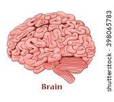 cartoon brain isolated on a... | Shutterstock .eps vector #398065783