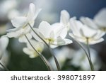 bunch of white flowers. macro...   Shutterstock . vector #398071897