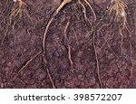 root in soil | Shutterstock . vector #398572207