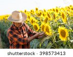 Senior Farmer Examining Crop O...