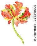 watercolor botanical...   Shutterstock . vector #398848003
