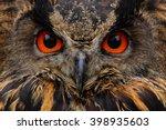 Detail Face Portrait Of Bird ...