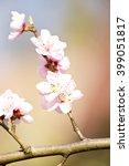 Apple Spring Flower White...