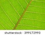 close up photo of a backlit... | Shutterstock . vector #399172993
