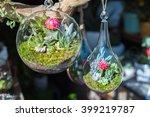 mini succulents in glass... | Shutterstock . vector #399219787