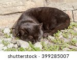 Small Wild Black Cat On The...