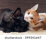 Stock photo cat and dog sleeping together kitten white with red the dog french bulldog puppy black dog 399341647