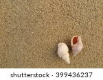 fossil shell on the sand beach | Shutterstock . vector #399436237