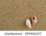 fossil shell on the sand beach | Shutterstock . vector #399436237