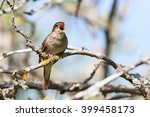 thrush nightingale  luscinia... | Shutterstock . vector #399458173