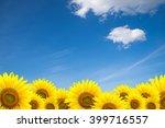 Sunflower Background For...