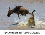 crocodile attack wildebeest in...   Shutterstock . vector #399820387
