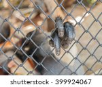 Monkey Finger In The Cage