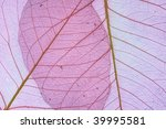 violet decorative leaves... | Shutterstock . vector #39995581