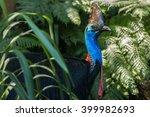 southern cassowaries   daintree ... | Shutterstock . vector #399982693