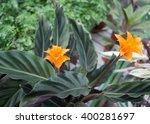 closeup of eternal flame flower ... | Shutterstock . vector #400281697