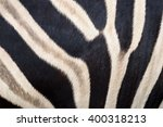 skin and the patterns of zebra | Shutterstock . vector #400318213