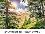 cedars of lebanon  beautiful... | Shutterstock . vector #400439953