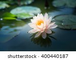 beautiful pink waterlily or... | Shutterstock . vector #400440187