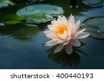 beautiful pink waterlily or... | Shutterstock . vector #400440193