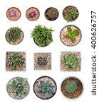 Succulents Or Cactus In Pot...