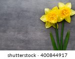 Yellow Daffodils On A Grey...