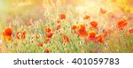 Poppy Field Background. Summer...