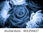 Blue Rose Flower