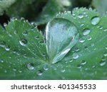 large waterdrop on plant leaf... | Shutterstock . vector #401345533