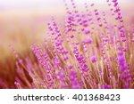 lavender field over sunser sky. ... | Shutterstock . vector #401368423