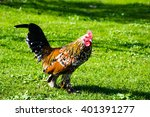 Rooster On Spring Stroll...
