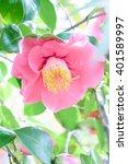 camellia   Shutterstock . vector #401589997