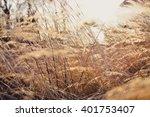 Brown Grass At Sunset....
