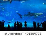 Whale Shark At Churaumi...