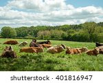 cattle in a field. | Shutterstock . vector #401816947