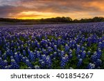 beautiful texas bluebonnet... | Shutterstock . vector #401854267
