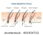 hair human growth cycle.... | Shutterstock .eps vector #401924713