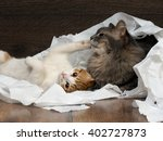 Funny Cat And Kitten Playing...
