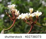 group of yellow white flowers... | Shutterstock . vector #402738373