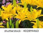 Beautiful Yellow Lily Flower I...