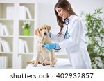 Stock photo veterinarian doctor and a labrador puppy at vet ambulance 402932857