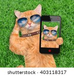 cat taking a selfie. | Shutterstock . vector #403118317
