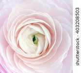 a macro shot of a pretty pink... | Shutterstock . vector #403208503