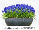 Grey Metal Flower Box With Blu...